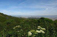 San Bruno Ridge Trail 165.JPG
