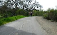 Alamitos Crk Monday Trail 163.JPG