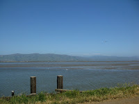 Home to Alviso Loop Logged 176.JPG