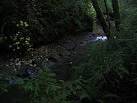 Big Basin Redwoods State Park 147.JPG