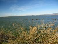 Moffet Shoreline 045.JPG