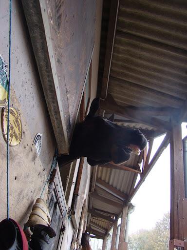 Vos plus belles grimaces de cheval et photos gag .... - Page 6 DSC00481