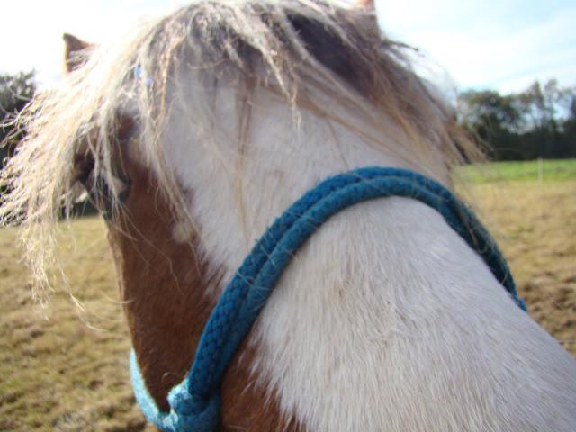 Vos plus belles grimaces de cheval et photos gag .... - Page 6 DSC00808