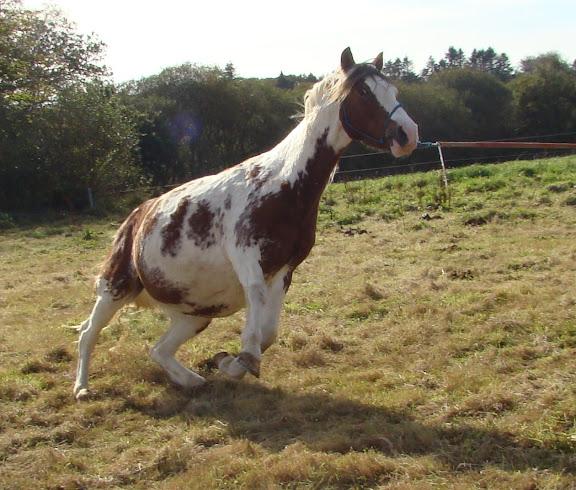 Vos plus belles grimaces de cheval et photos gag .... - Page 6 DSC00922_det