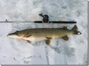 5,5 kg - 92 cm (k)