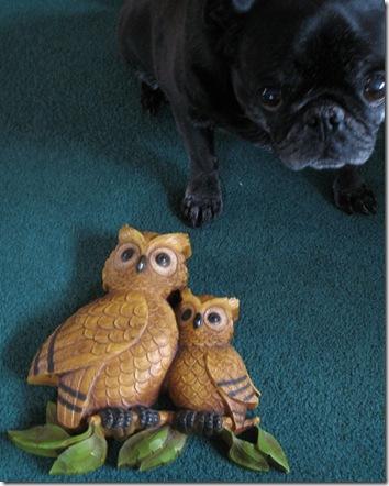 Owl and Pug