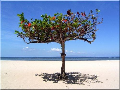 الطبيعة في بالي