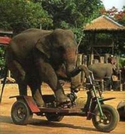 رحلات تايلاند