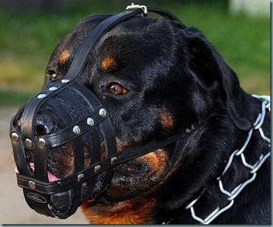 hs-collar-leather-muzzle-for-rottweiler_lrg