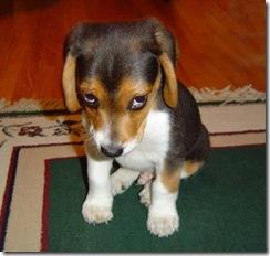 cão desconfiado