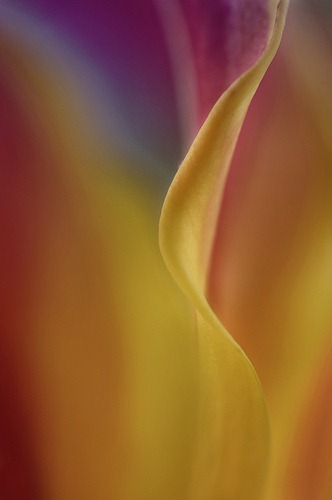 flower-abstract-6