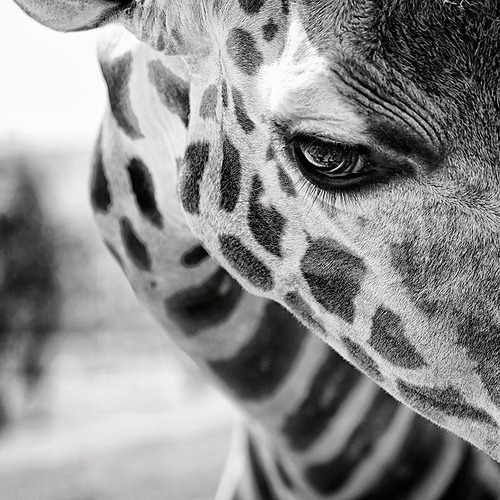bw-eyelashes-animal