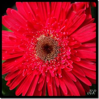 PinkFlower