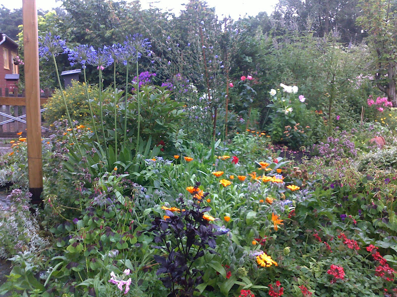 E71 07082010065 Regenachtige dag in onze tuin.
