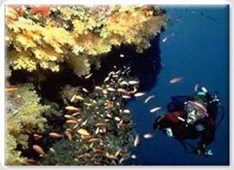 taveuni-diving-fiji