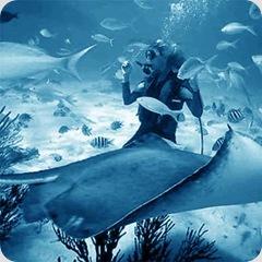 scuba-diving-sq