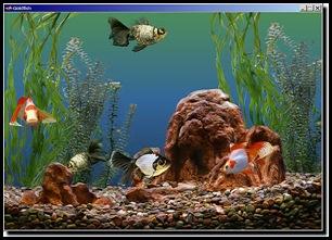 goldfish_aquarium-654-scr