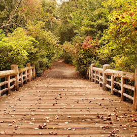 A Bridge Into Autumn by Zev Steinhardt - City,  Street & Park  City Parks ( orange, colors, green, fences, new york, nyc, autumn, fall, trees, brown, bridge, prospect park, brooklyn )