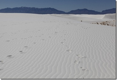 White Sands with Colleen 3-10 022