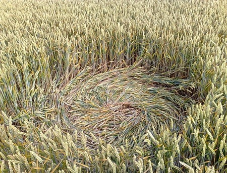 Cercuri in lanuri f