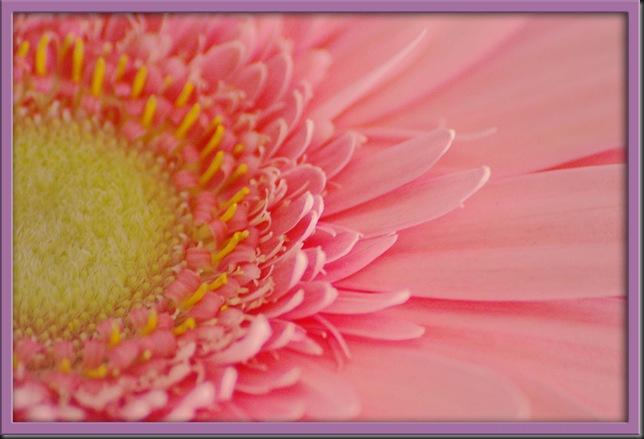 Low Contrast Pink