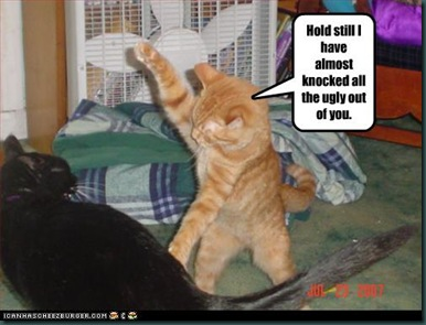 funny-pictures-cat-attacks-ugly-cat
