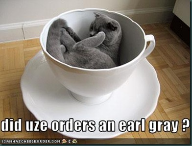 funny-pictures-cat-is-in-teacup