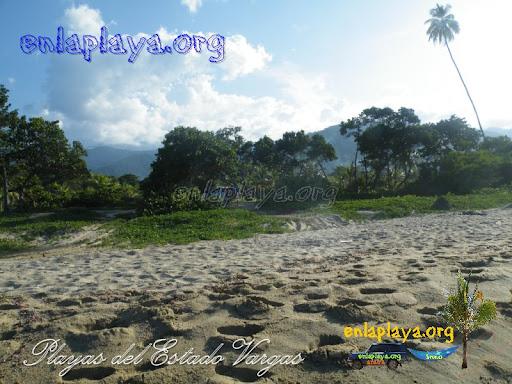 Playa La Canal  (La Sabana)V016
