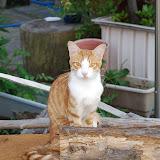 尾道の猫。めっちゃ細い。