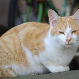 やたら睨む猫。ミッキー。