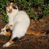舞鶴の猫。完全に無防備。・・・誘っているのかっ!