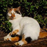 舞鶴の猫。熟睡ですね。