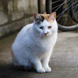セクシー猫。やたらカメラ目線してくれる子。