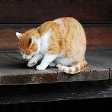 鎌倉の猫。確か報国寺らへんで遭遇。