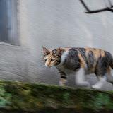 猫ダッシュ!