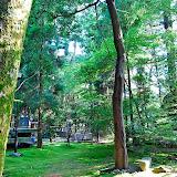 尾山神社のお庭。新緑の6月。