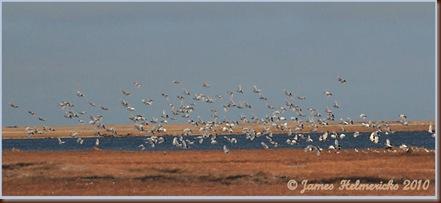 WIPT-flock_flight_5403