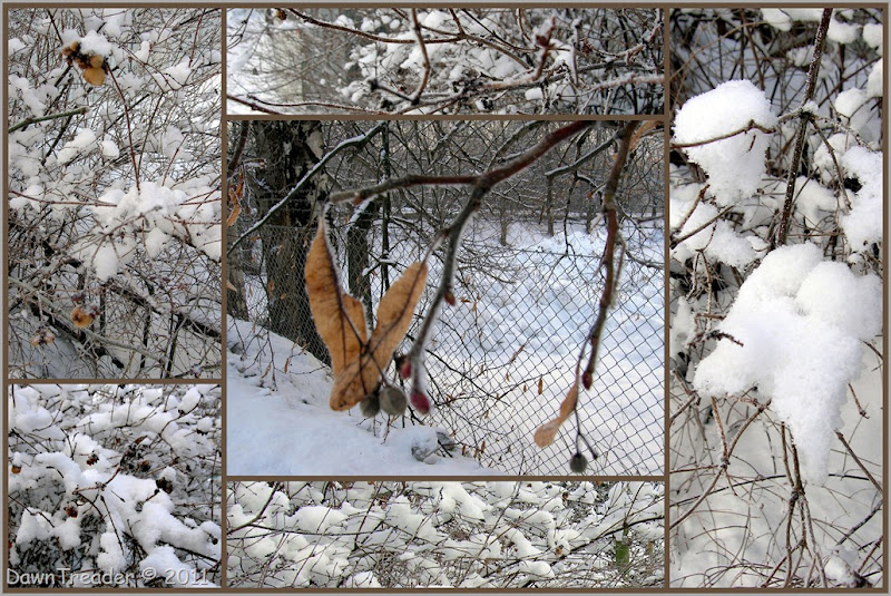 2011-01-14 Snow Collage7
