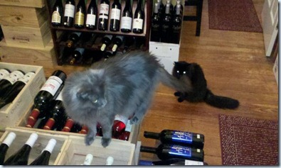 Wine cats
