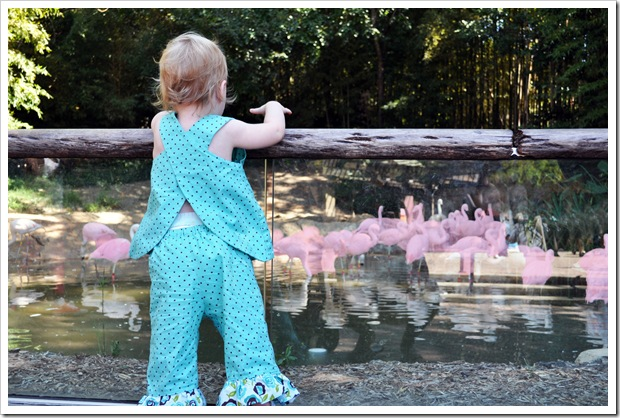 EC flamingos 2