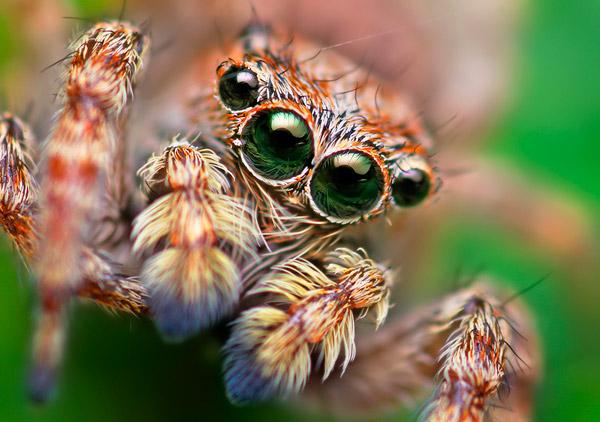 Глаза паука