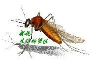 mosquito01
