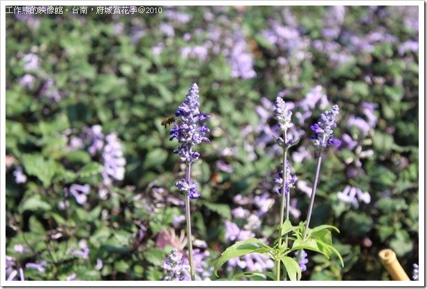 Tainan_Park_flower34