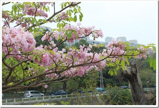tainan_flower06
