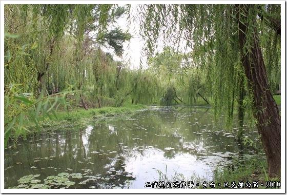 巴克禮紀念公園,小溪的兩岸種滿的柳樹,清風徐徐,搖曳生姿!