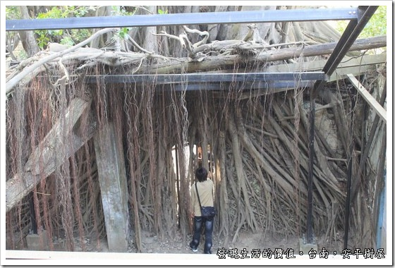 台南安平樹屋