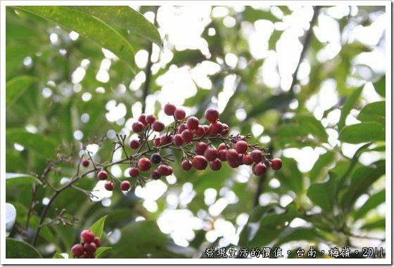 plum_blossom07
