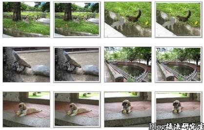 下圖為Google的Picasa網路相簿重複的圖片範例,每一張照片都重複。