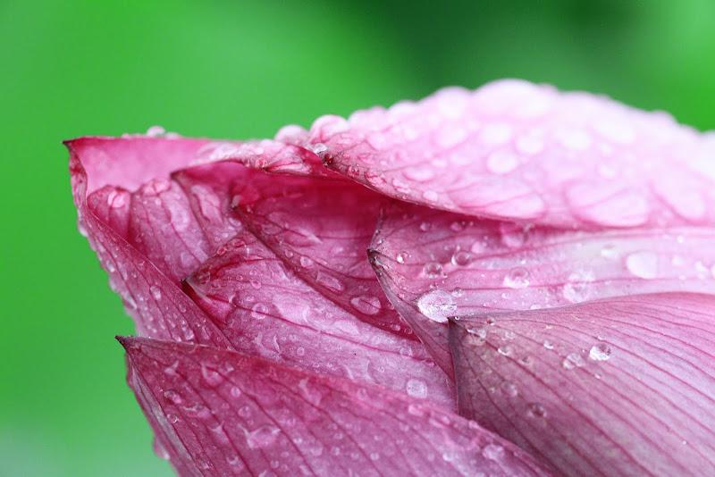 99/05/23農改場::雨荷