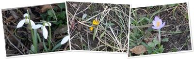 Frühling anzeigen